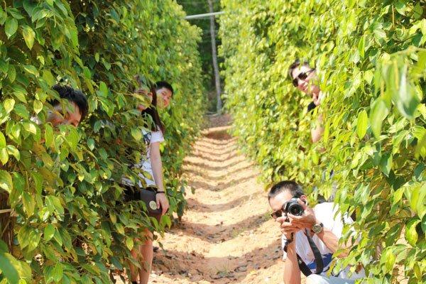 Tham quan vườn tiêu Phú Quốc